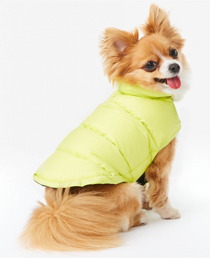 dog-down-puffer-coat